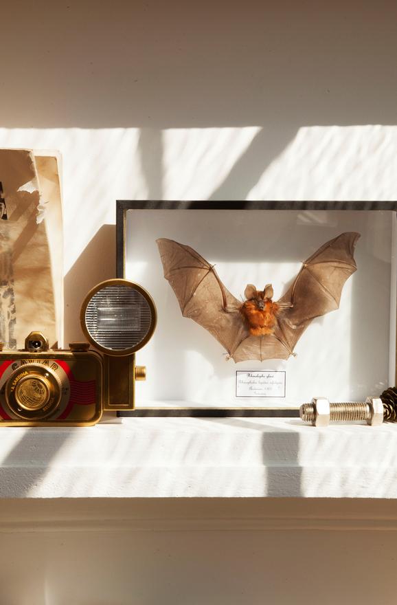 maya-interieur-parisien-appartement-atelier-artiste-parisienne-papillon-naturalise